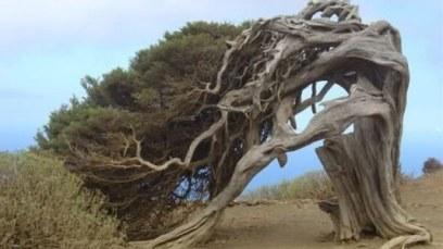 albero-storto